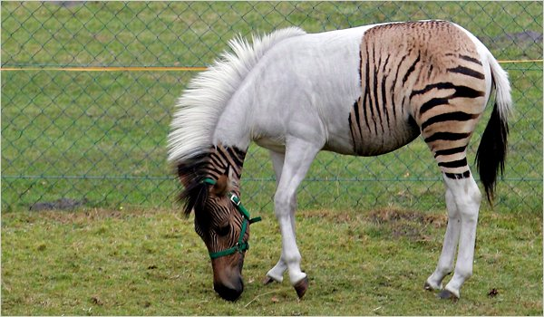Hybrid Animals - Science in Our World: Certainty & Controversy
