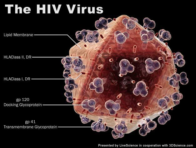 HIV Virus: http://www.personal.psu.edu/afr3/blogs/SIOW/HIV%20virus.jpg