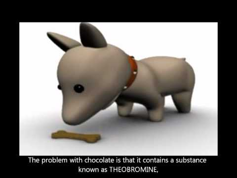 NEVER give chocolate to your dog! - SiOWfa12: Science in Our World ...