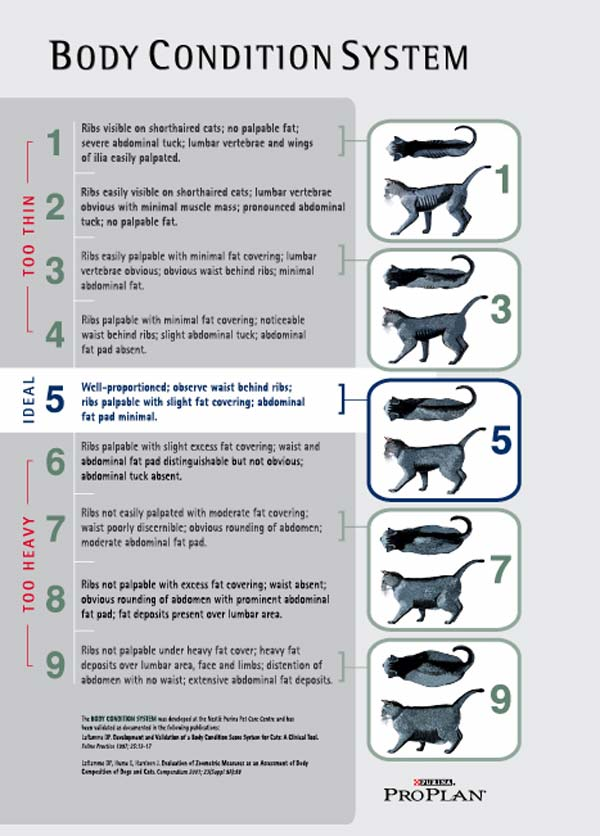 Cat Weight Chart Peopledavidjoel