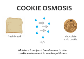 Thumbnail image for cookie_osmosis.png