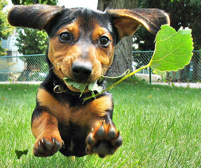 cute-dachshund-dog-grass-Favim.com-113324.jpg