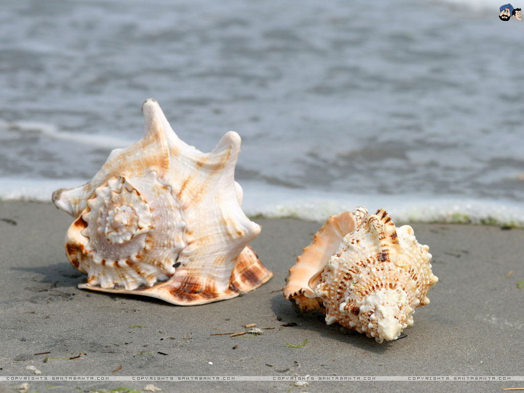 Seashell Home Decor Siowfa12 Science In Our World Certainty And Controversy