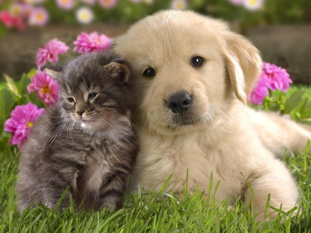 Puppies-and-kittens-puppies-vs-kittens-22175880-1024-768.jpg