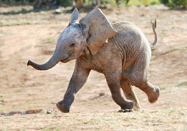 happy-baby-elephant.jpg