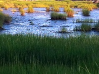 marsh colors.JPG