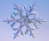 Thumbnail image for stellar dendrite snow flake.jpg