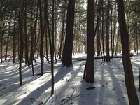 Thumbnail image for laurel hill snow trail 2.JPG