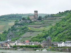 Thumbnail image for vinyard on the rhine 2.jpg
