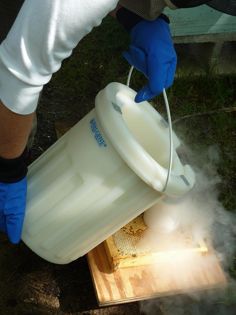 http://www.personal.psu.edu/jad52/blogs/bee_log/2011/05/30/pouringLiquidNitrogen.jpg