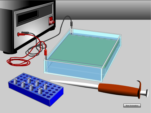 electrophoresis image link to flash animation