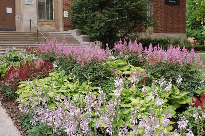 Hosta and Astilbe | Horticulture 131 on hosta and daylily garden, hosta and caladium garden, hosta garden plans blueprints, hosta and hydrangea garden,