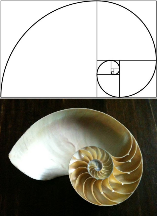 essays on the golden ratio From now on, i will investigate several different paper sizes that have different ratios including current a4 size ratio: 3 to 2, 4 to 3, 1618 to 1(golden ratio) and 1414 to 1 by using spreadsheet and gsp.