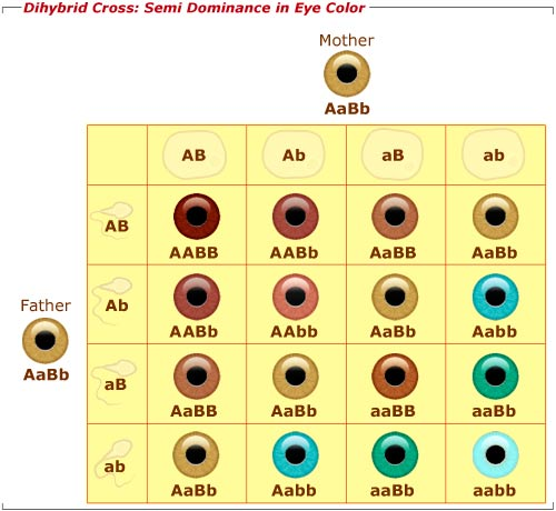 Eye color determination chart