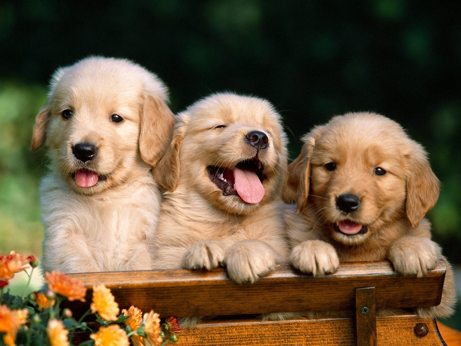 Socializing Your Puppy: Dos and Don'ts